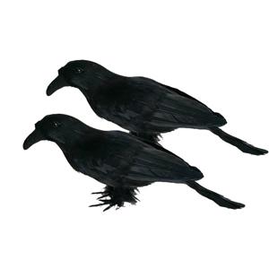 Kraehen Rabe schwarz halloween