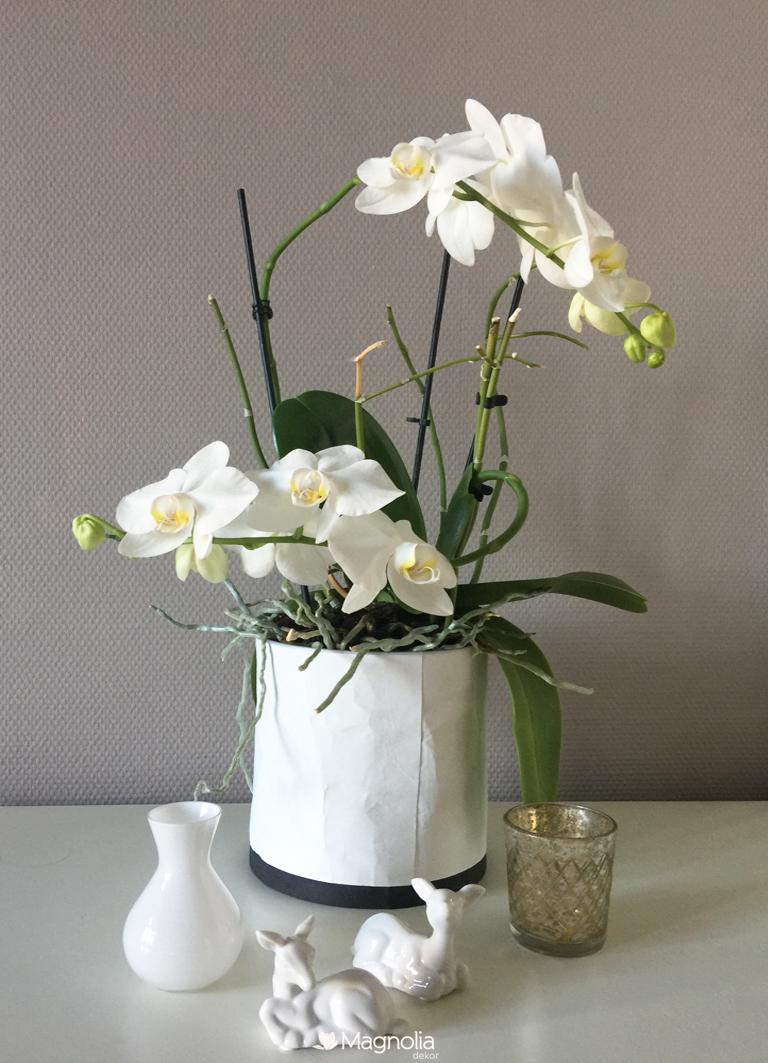 Uebertopf Lubech Living OOhh weiss recycled Papier Wasserdicht Orchidee